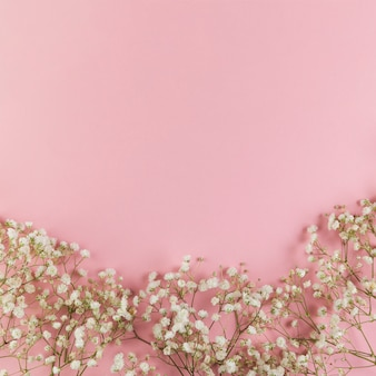 White fresh baby's breath flowers against pink background