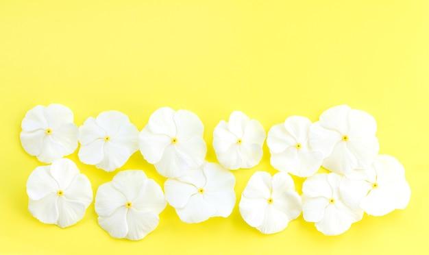 복사 공간이 있는 노란색 배경에 흰색 신선한 꽃 위쪽 보기
