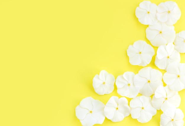 복사 공간이 있는 노란색 배경에 흰색 신선한 작은 꽃 위쪽 보기