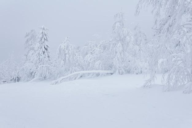 하얀 얼어붙은 겨울 산 숲, 두꺼운 서리로 덮인 나무들은 폭설 후 깊은 눈 속에 서 있다
