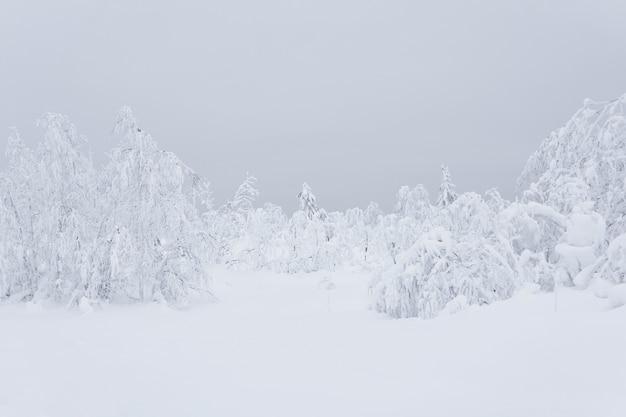 하얀 얼어붙은 겨울 산 숲, 두꺼운 서리로 덮인 나무들은 깊은 눈 속에 서 있다