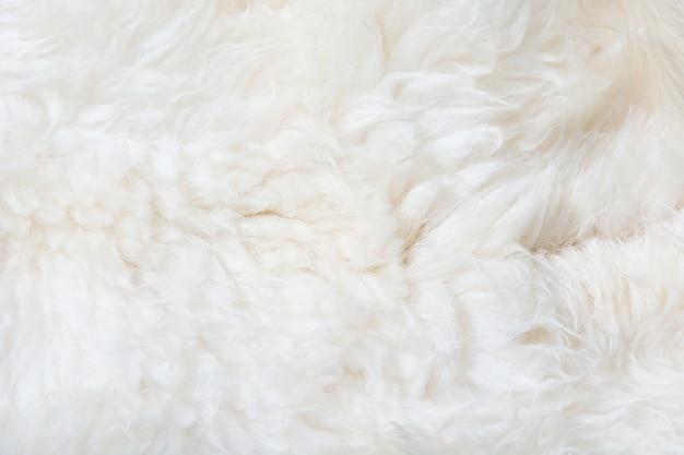 White fur close up