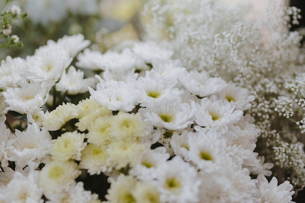 White gerbera daisy and white caspia