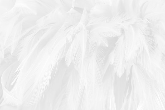 White grey feather wing pattern texture for background and design art work.