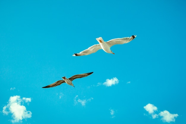 Белые чайки, парящие в небе. птичий полет