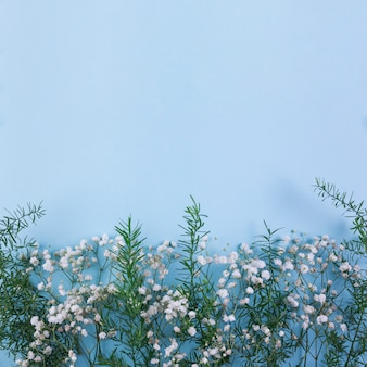 White gypsophila and leaves on the blue background