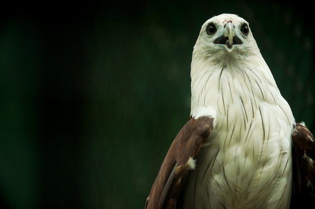 白頭ワシ、クローズアップ写真で美しく見える