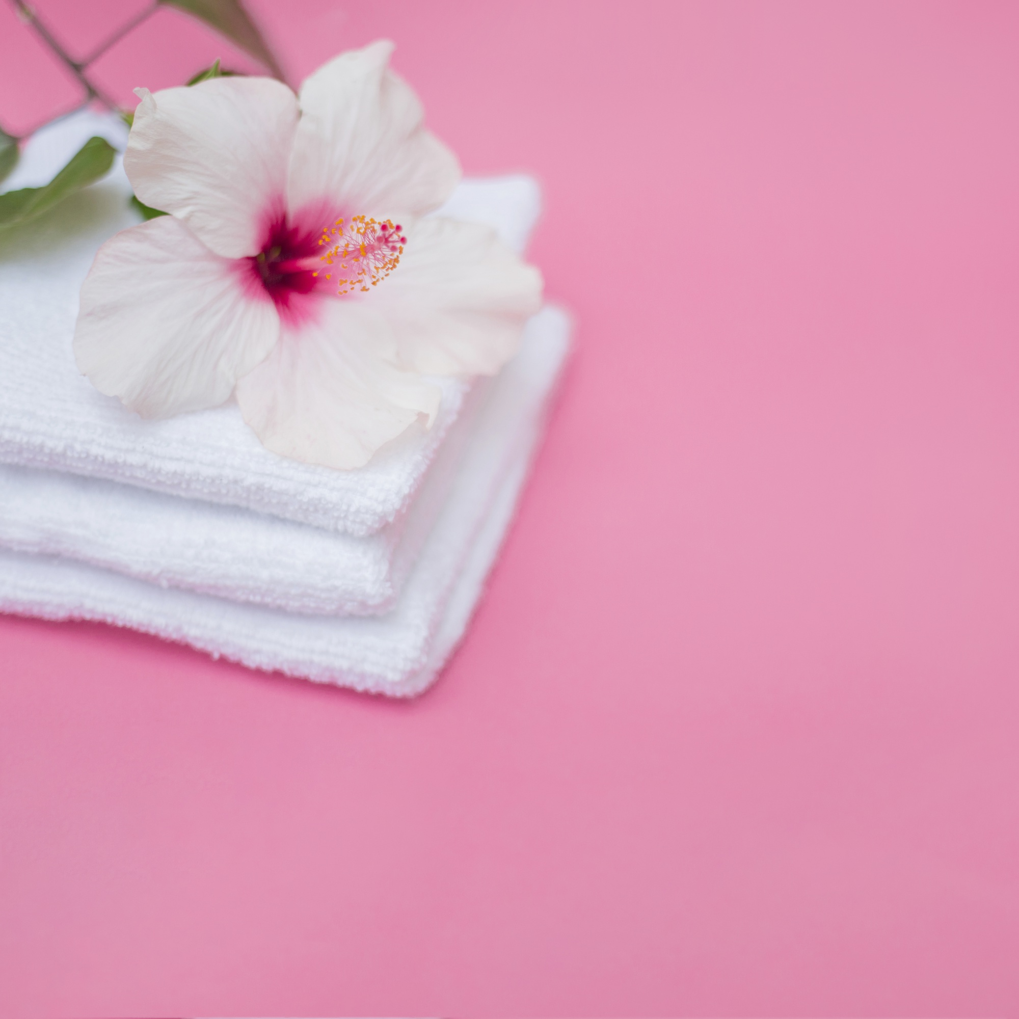 White hibiscus flower and towels on pink background