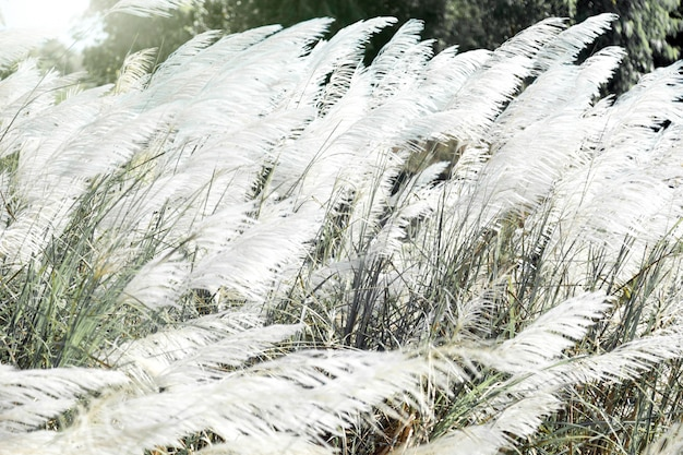 White high grass on windy day in winter season