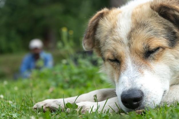 目を閉じて自然環境で休んでいる白いヒマラヤ犬