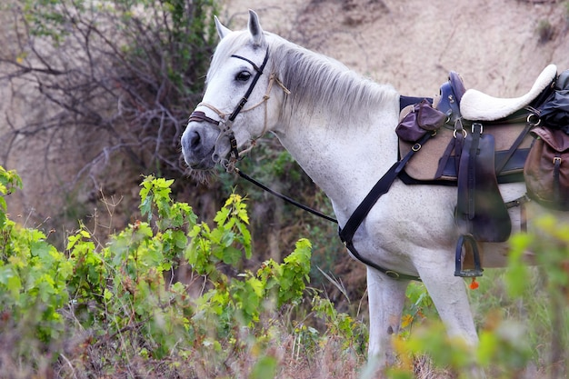 White horse gear saddle on the nature