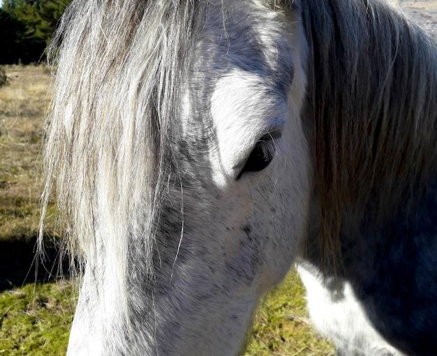 White horse head very close