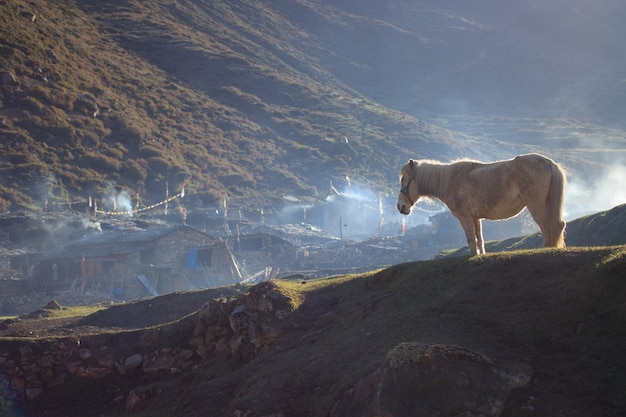 춥고 화창한 아침에 연기로 가득 찬 히말라야 산악 마을 앞의 백마