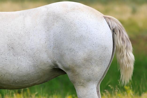 Белая лошадь на летнем пастбище.