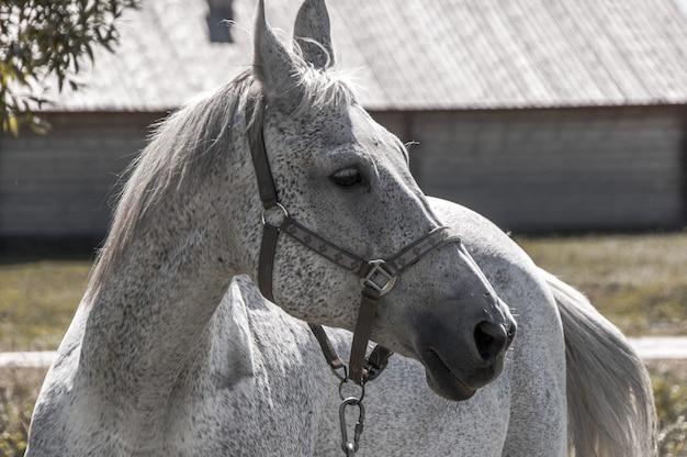 の側に白い馬。