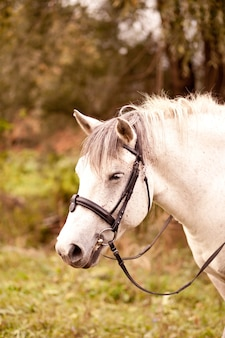 A white horse standing in a nature in a horse farm