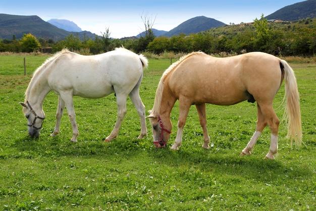 White horses meadow prairie grassland pyrenees