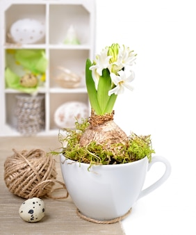White hyacinth in a cup and easter decorations in a shadowcase