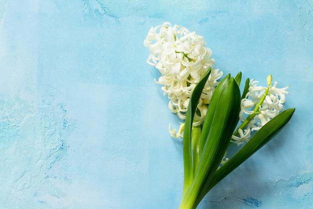 青いコンクリートの背景に白いヒヤシンス花春の花の背景上面図フラットレイ
