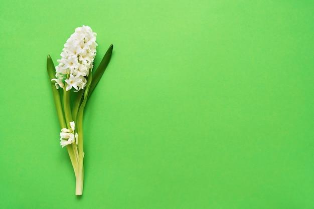 緑の背景に白いヒヤシンスの花。上面図、コピースペース。グリーティングカード。