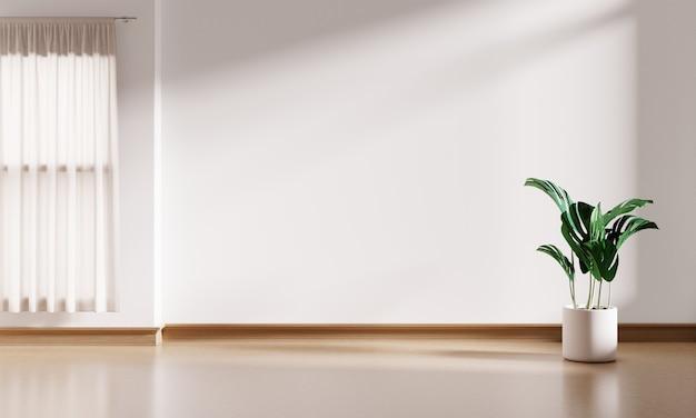 White interior empty room background with monstera plant pot