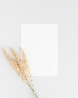 White invitation card mockup flat lay with a three dry pampass grass branches