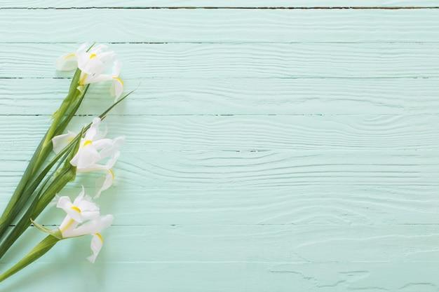 녹색 나무 표면에 흰 아이리스