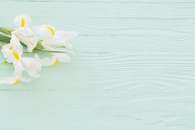 White irises on green wooden background