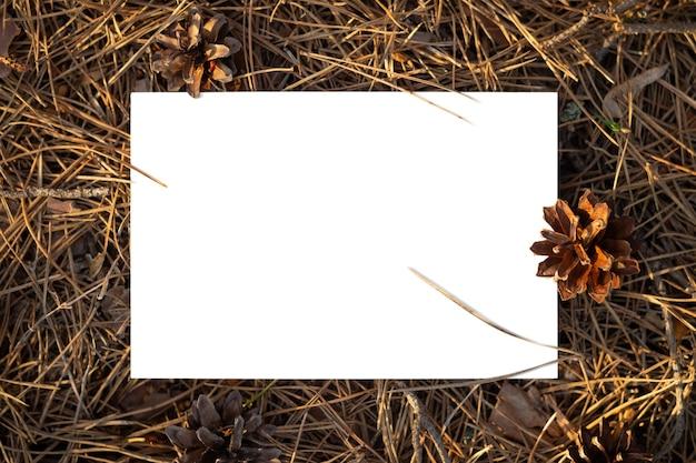 Белая изолированная бумага в сосновом лесу с шишками