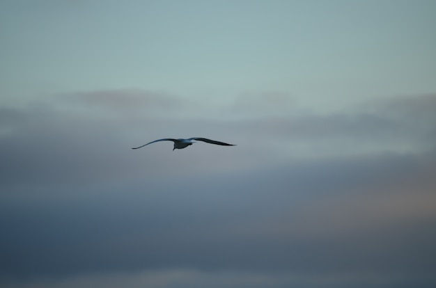 White isolated seagull on a blue sky background