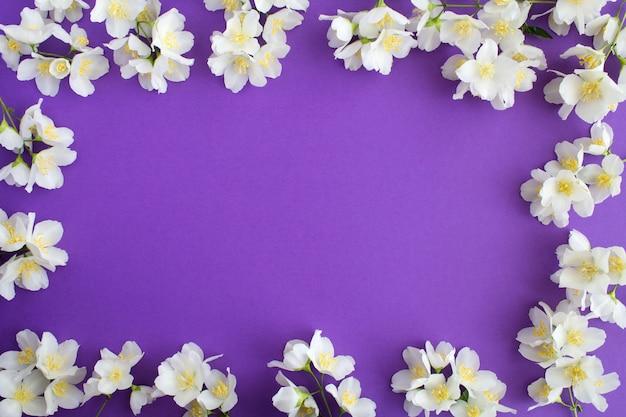 Белые цветы жасмина на фиолетовом