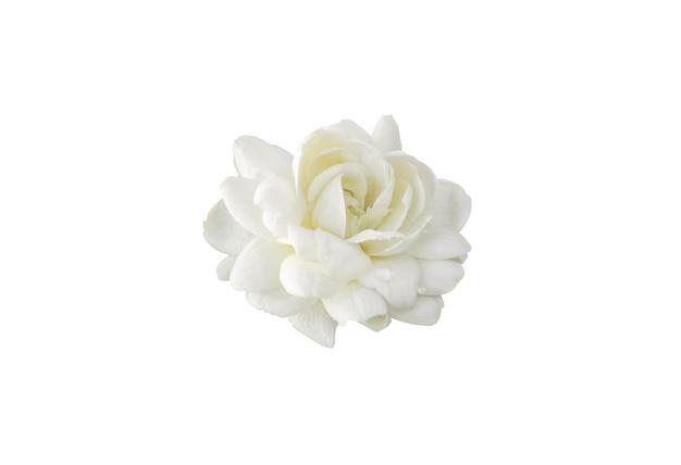 White jasmine on white isolated