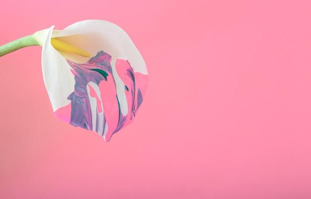 ピンクの背景にいくつかの色で描かれた白いカラの花。コピースペースと多色の春夏の花のコンセプト。