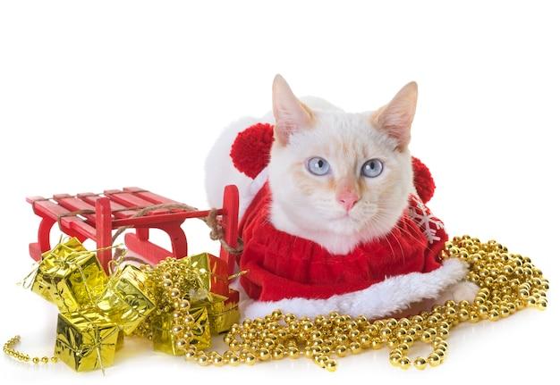 Белый котенок и рождество