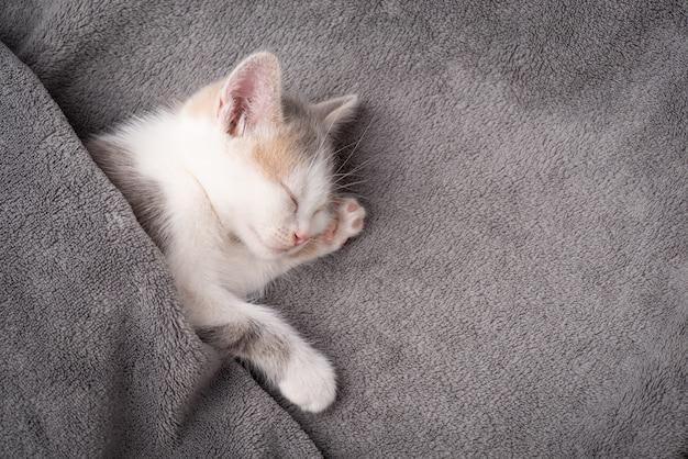 眠っている灰色の毛布で覆われた白い子猫。美しい生まれたばかりの猫