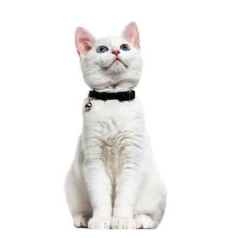 벨 칼라를 착용하고 올려다 보는 흰 고양이 혼합 품종 고양이