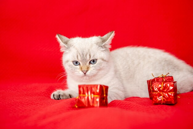 Белый котенок играет с подарочной коробкой на красном фоне рождество и новый год концепция