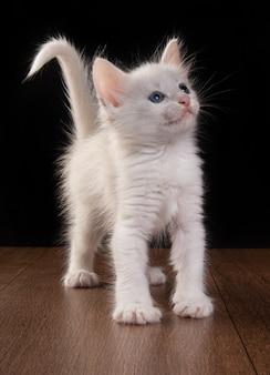 白い子猫、木製のテーブルで遊ぶ白い子猫。