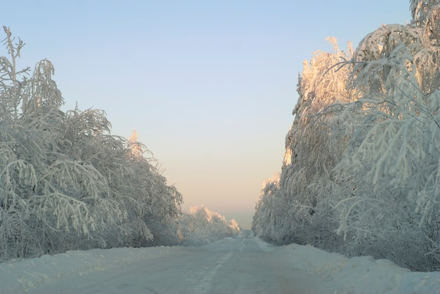 雪に覆われた森を通る白い風景冬の氷の道