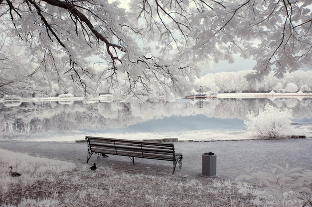 White landscape with bench near the lake