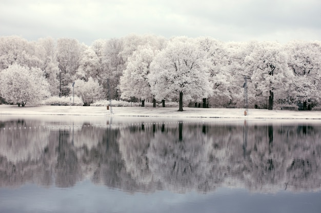 White landscape with forest near the lake