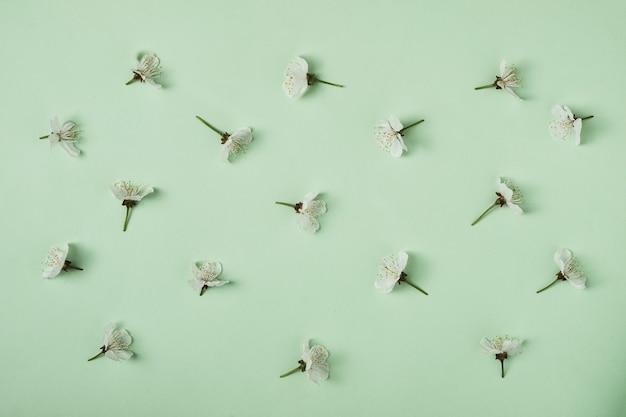 봄에 만발한 달콤한 벚꽃의 흰색 잎이 패턴으로 배열되어 있습니다. 봄 및 개발 최소한의 개념입니다.