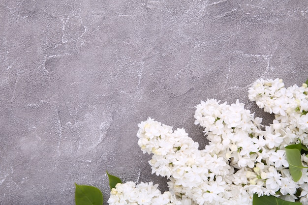 White lilac flowers branch on grey background concrete  with copyspace