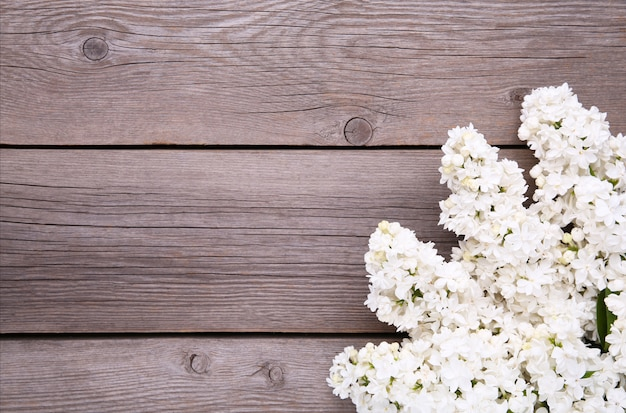 White lilac flowers branch on grey background  with copyspace