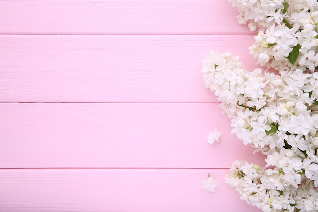 White lilac flowers branch on pink background  with copyspace