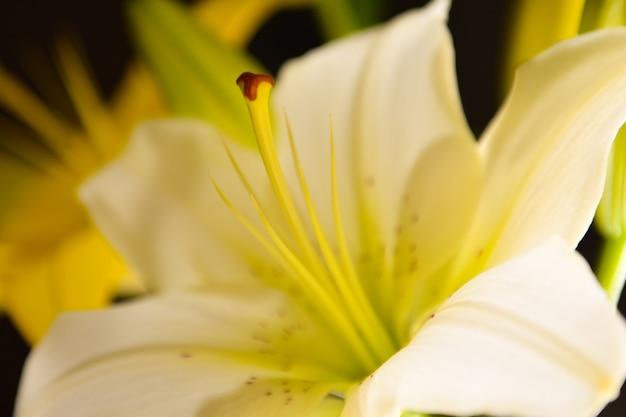 흰 백합 꽃