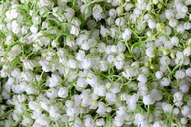 スズランの白いユリ