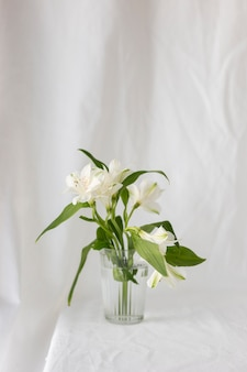 White lily flowers in front of white curtain