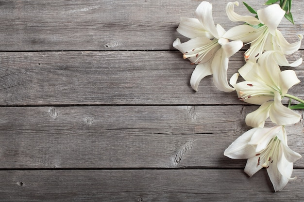 White lily on wooden background