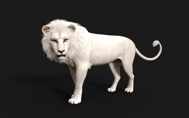 White lion acts and poses isolated on dark black background with clipping path lion king